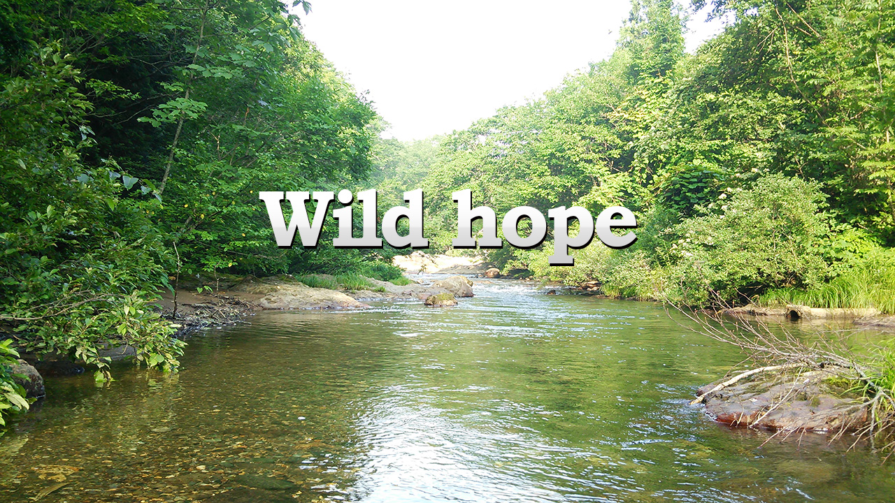 アウトドア教室Wild hope